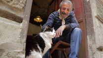 """Kedi - Des chats et des hommes EXTRAIT VO """"Caresses"""""""