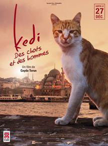 Kedi – Des chats et des hommes streaming