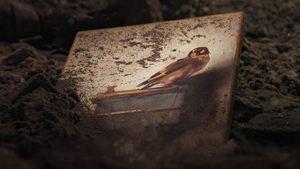 Le Chardonneret : connaissez-vous le tableau vu dans le film ?