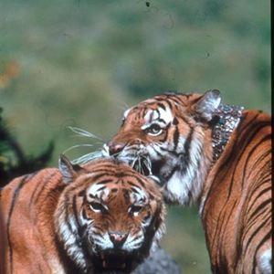Deux frères : Photo