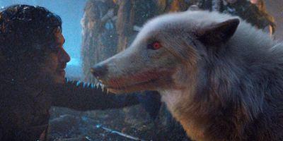 Game of Thrones : les loups géants des Stark ont-ils réellement existé ?