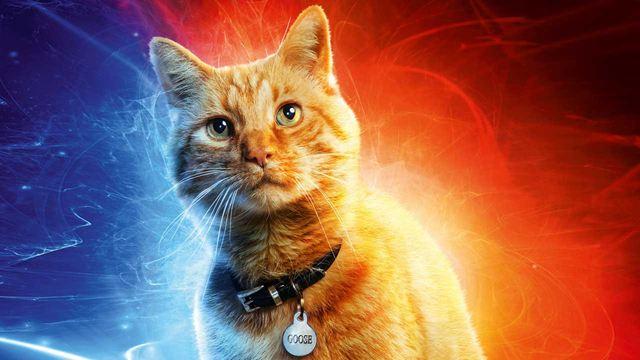 Captain Marvel : Goose s'ajoute à la liste de nos chats de cinéma préférés