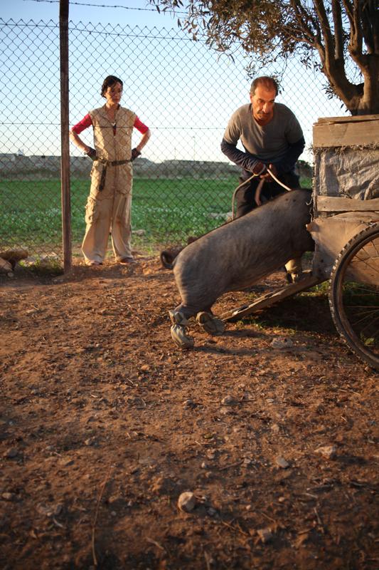 Le cochon de Gaza : Photo