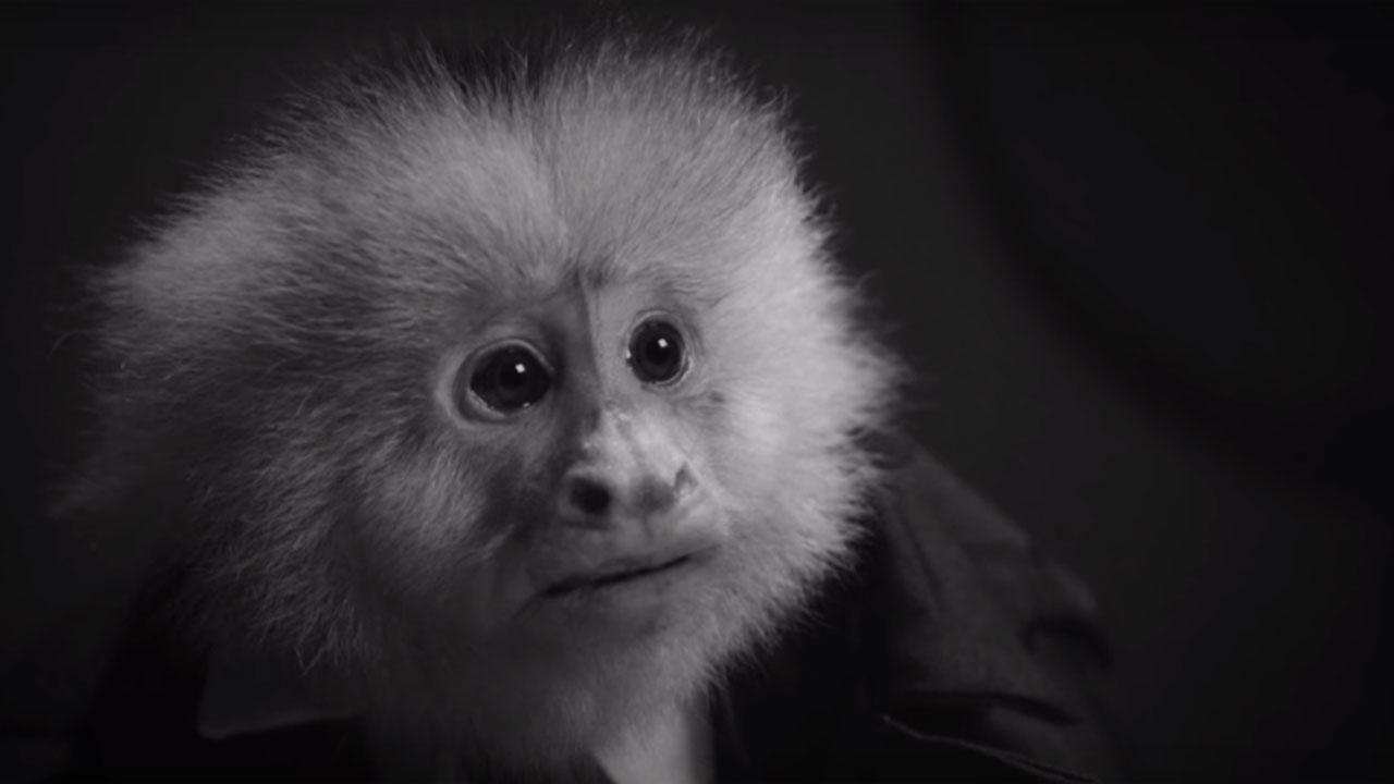 Netflix : David Lynch dévoile un court métrage complètement fou