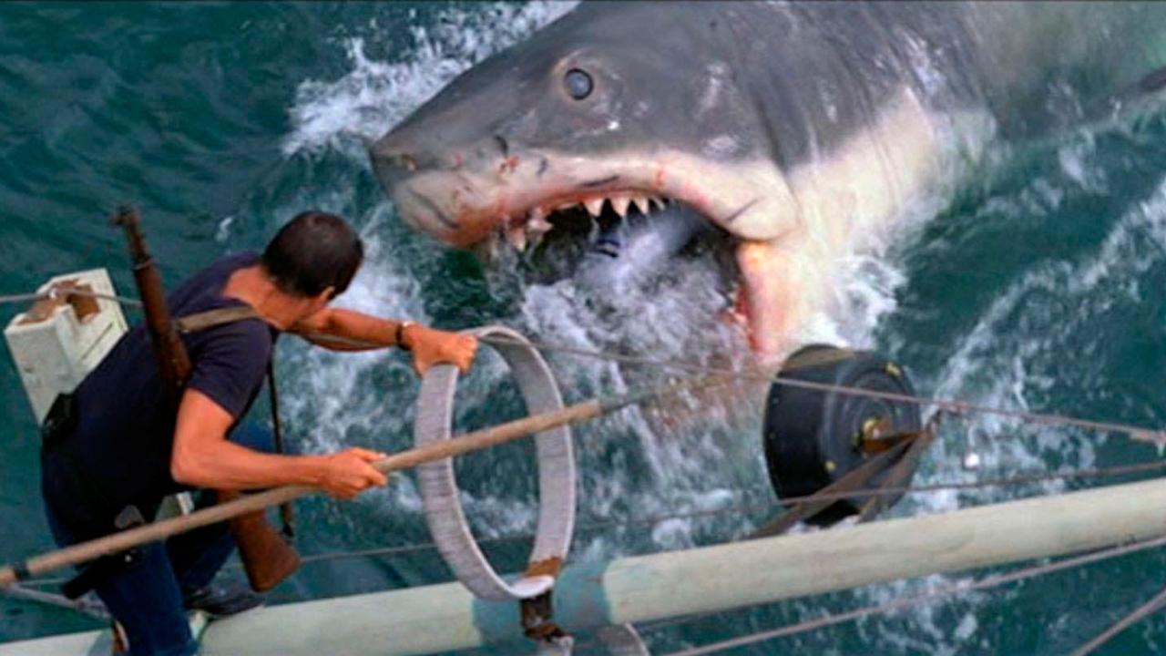 Les Dents de la mer sur Netflix : 5 films de requins à voir sur les plateformes