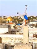 Derrière les fronts: résistances et résiliences en Palestine