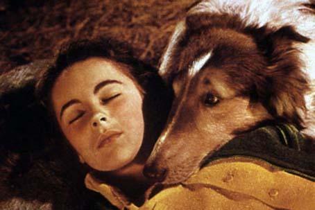 Le Courage de Lassie : Photo Elizabeth Taylor, Fred M. Wilcox