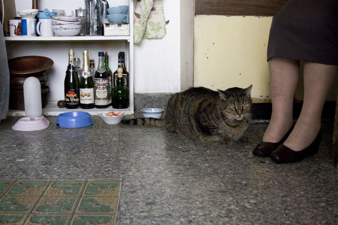 Les Vieux chats : Photo