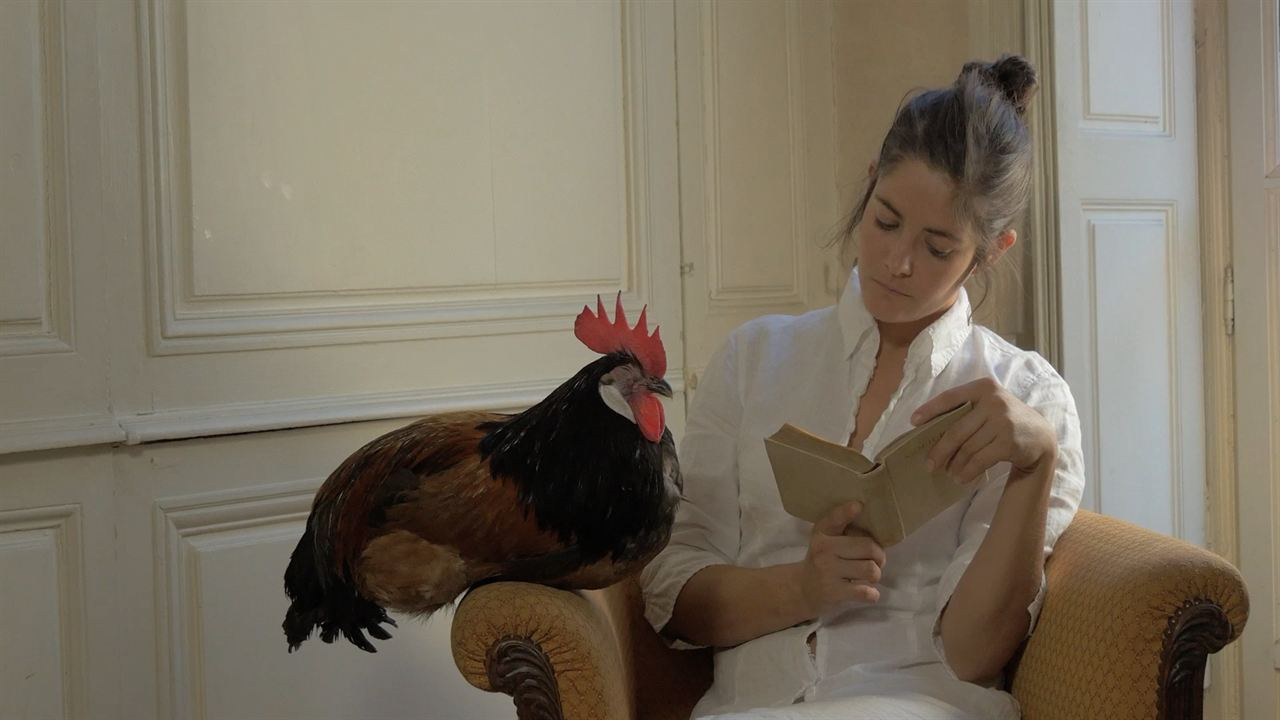 La Fable du coq : Photo