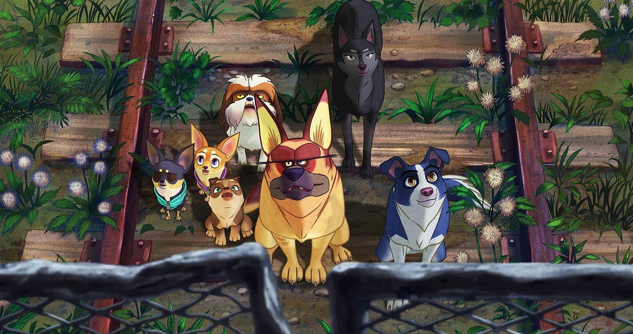 Nous, les chiens : Photo