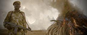 The Ivory Game : Bande-annonce du documentaire choc produit par DiCaprio