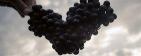 """Wine Calling : """"Le vin c'est du plaisir et non une étiquette ou une appellation"""""""