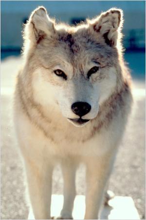 Wolf Lake : Photo