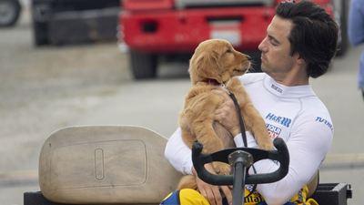 Dans les yeux d'Enzo sur Disney + : un film familial à découvrir si vous avez aimé Hatchi et Mes vies de chien
