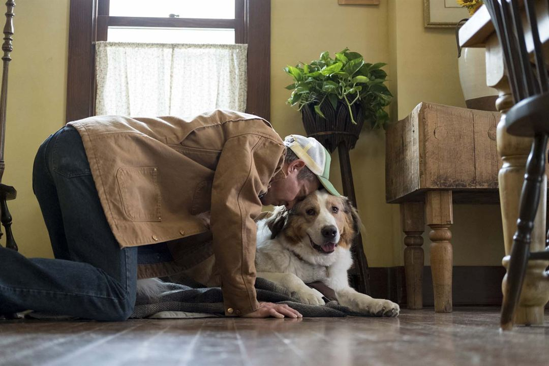 Mes autres vies de chien: Dennis Quaid